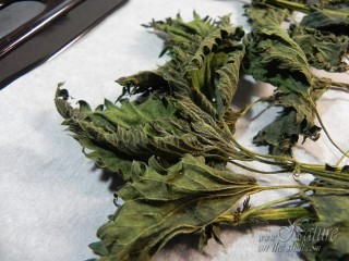 Dried nettle herb