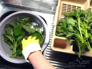 Washing of stinging nettle